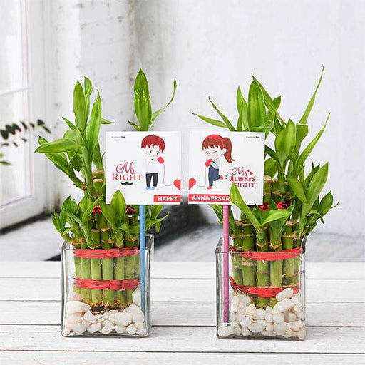 Celebrate Anniversary with 2 Layer Lucky Bamboo Plants - Nurserylive