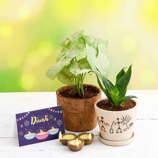 Celebrate Clean Diwali with Air Purifier Plants and Eco Friendly Diyas - Nurserylive