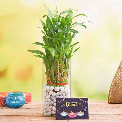 Celebrate Diwali with 3 Layer Lucky Bamboo Plant - Nurserylive