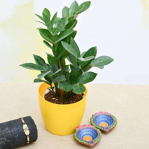 Celebrate Eternal Bond with ZZ Plant and Fancy Rakhi - Nurserylive
