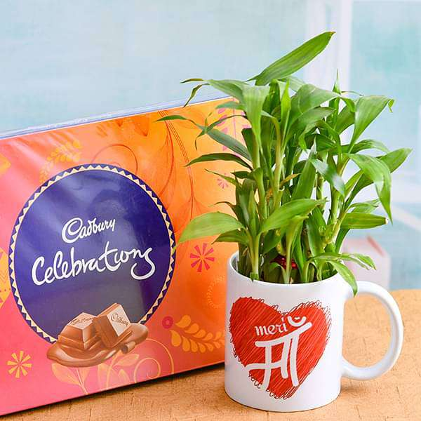 Celebrate Every MOMent with 2 Layer Lucky Bamboo Plant in Mug and Chocolate - Nurserylive