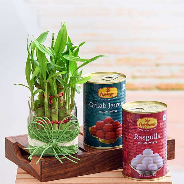 Celebrate Happiness with 2 Layer Lucky Bamboo and Sweets - Nurserylive