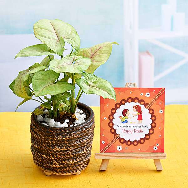 Celebrate Timeless Bond with Syngonium Plant and Happy Rakhi Easel - Nurserylive