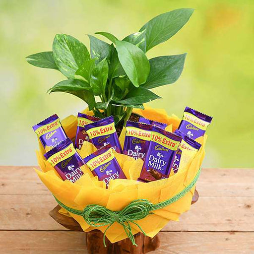 Chocolate Basket with Money Plant - Nurserylive