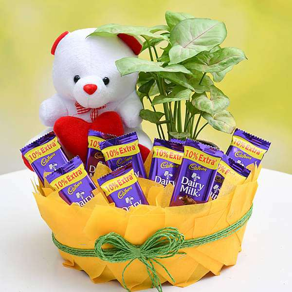 Chocolate Basket with Syngonium and Cute Teddy - Nurserylive