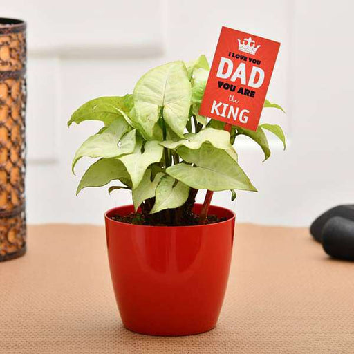 Cool Syngonium For Coolest Dad - Nurserylive