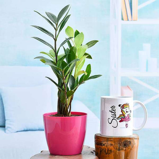 Cute ZZ Plant for Sweet Sister - Nurserylive
