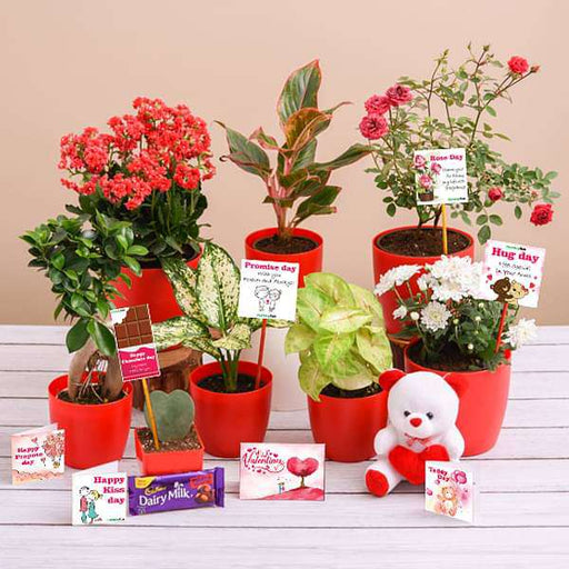 Deliver Love Each Day this Valentines Week - Nurserylive
