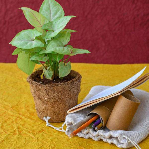 Eco friendly Syngonium Variegated with Plantable Stationery Kit- Gift Plant - Nurserylive