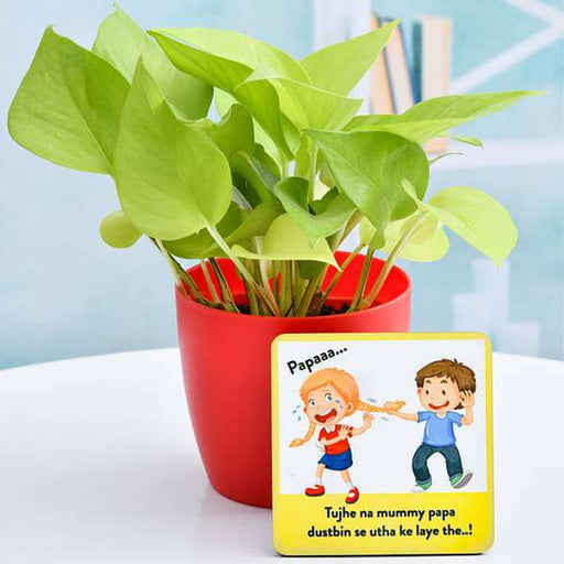 Evergreen Money Plant for Evergreen Sibling Bond - Nurserylive