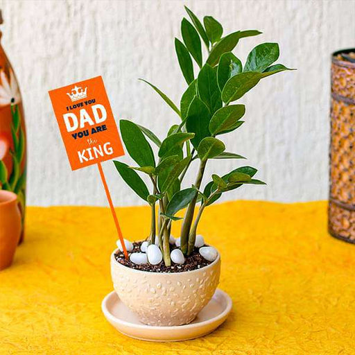 Evergreen ZZ Plant in Ceramic Bowl for Coolest Dad - Nurserylive