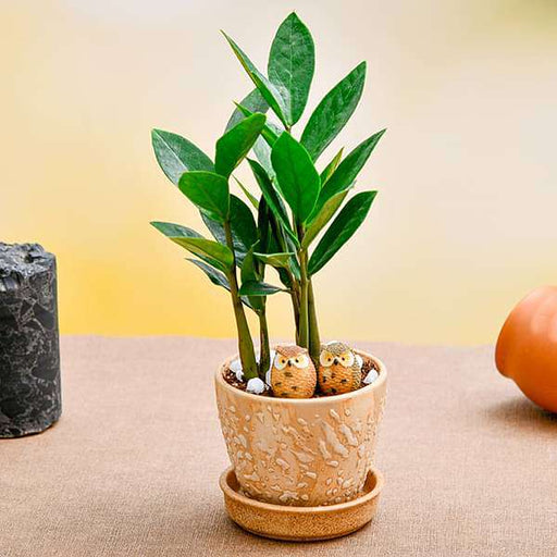 Everlasting ZZ Plant for Naughty Siblings - Nurserylive