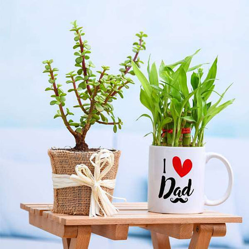 Good Luck Plant Combo for Loving DAD - Nurserylive