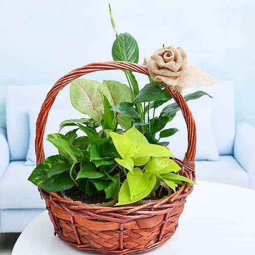 Green basket of Love with Jute Rose - Nurserylive