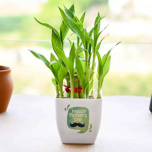Happy 2 Layer Lucky Bamboo for Happy Fathers Day - Nurserylive