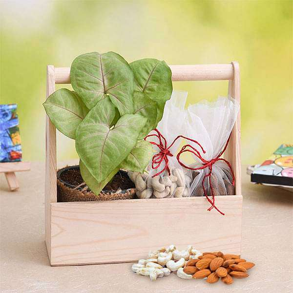 Healthy Basket with Syngonium and Dry Fruits - Nurserylive