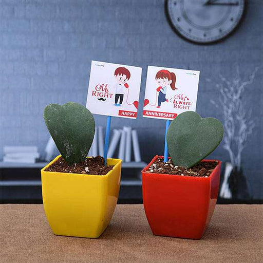 Lovable Heart Shape Hoya Plants to Celebrate Love - Nurserylive