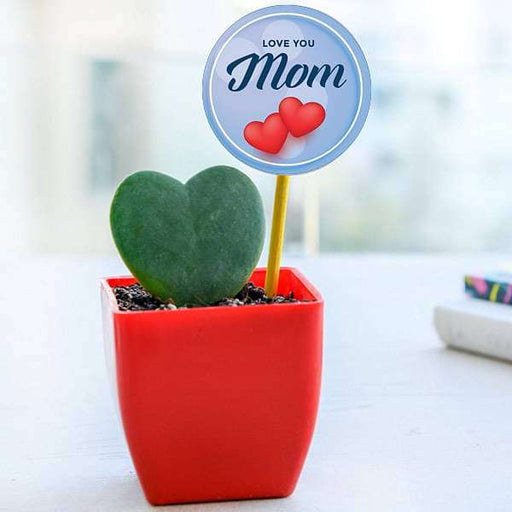 Lovely Heart Plant for Lovely Mother in Plastic Pot - Nurserylive