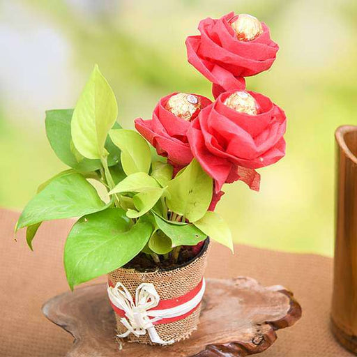 Lovely Money Plant with Ferrero Rocher Roses - Nurserylive