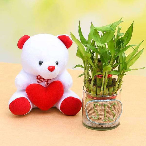 Make Her Life Colorful with 2 Layer Lucky Bamboo Plant and Cute Teddy - Nurserylive