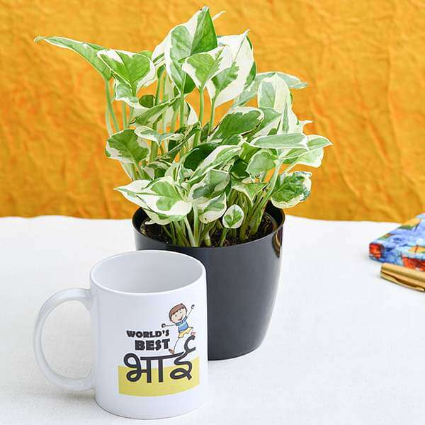 Money Plant with Mug for World Best Brother - Nurserylive