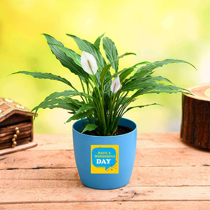 Peace Lily for Wonderful Day - Gift Plant - Nurserylive