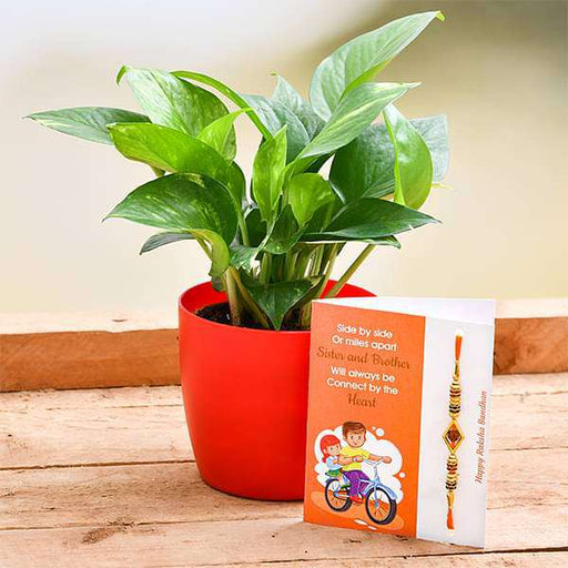 Rakhi Special Green Money Plant for Prosperity - Nurserylive