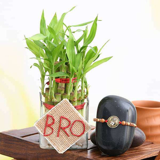 Rakshabandhan Special 2 Layer Lucky Bamboo and Designer Rakhi for Brother - Nurserylive