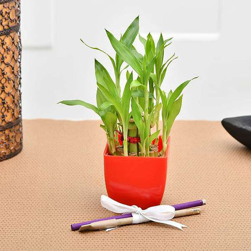 Say thank you to teachers with 2 Layer Lucky bamboo - Nurserylive