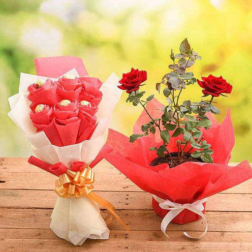 Share Love with Rose Plant and Chocolate Bouquet - Nurserylive
