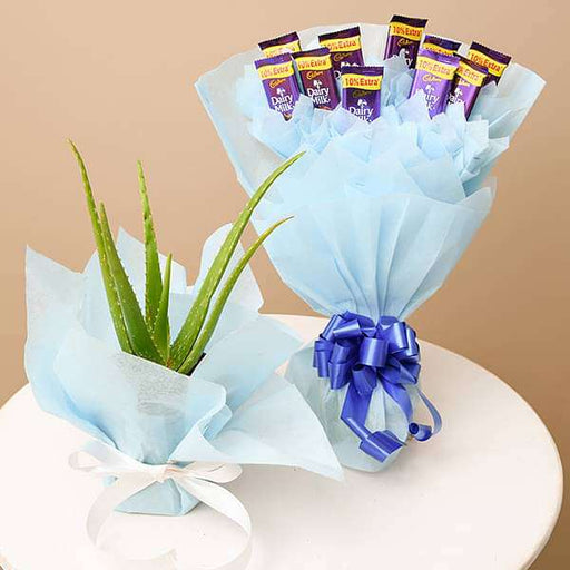Show Gratitude with Aloe vera and Chocolate Bouquet - Nurserylive