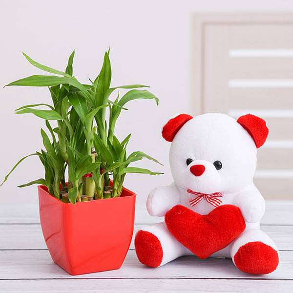Buy Surprise Your Loved One with 2 Layer Lucky Bamboo and Teddy online from  Nurserylive at lowest price.
