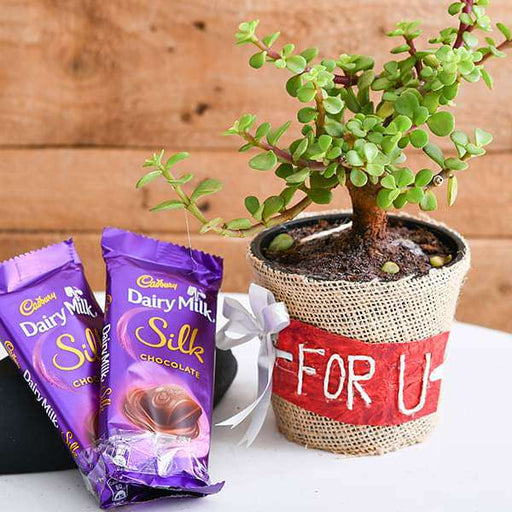 Wish Happiness and Luck with Jade Plant and Chocolates - Nurserylive