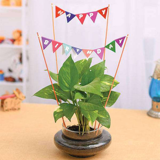 Wish Happy Birthday with Money Plant in a Round Glass Vase - Nurserylive