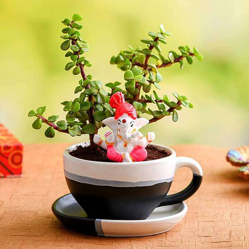 Wish Happy Diwali with Jade plant in Ceramic pot and Lord Ganesha Idol - Nurserylive
