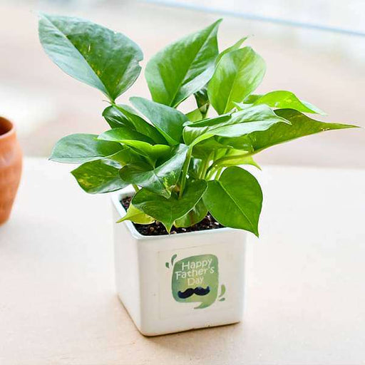 Wonderful Money Plant for Special Dad - Nurserylive