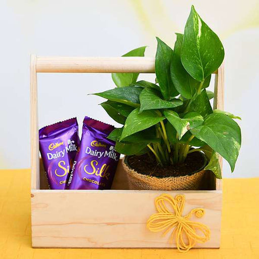 Wooden Basket of Love with Money Plant and Chocolate - Nurserylive