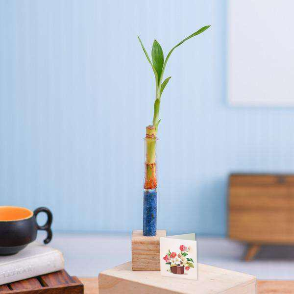 Lucky Bamboo Stick with Wooden Stand - Corporate Gift (Set of 30)