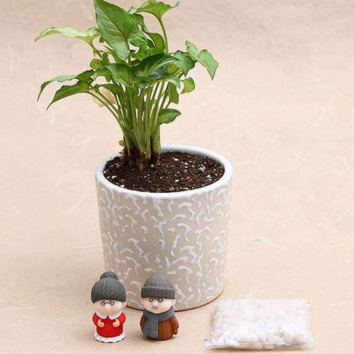 Celebrate years of togetherness with Dada - Dadi - Miniature Garden - Nurserylive