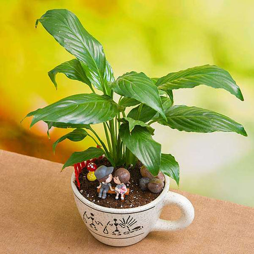 DIY Air Purifier Peace Lily for someone special - Miniature Garden - Nurserylive