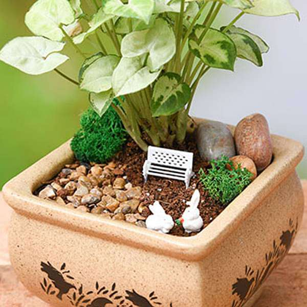 DIY Bundle of joy with - Miniature Garden - Nurserylive
