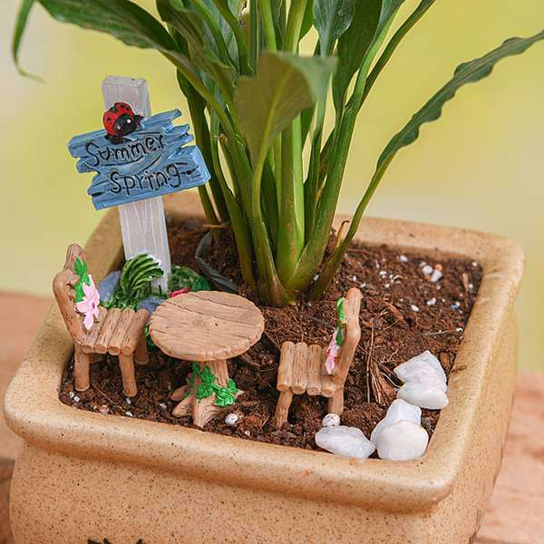 DIY Evening in the garden - Miniature Garden - Nurserylive