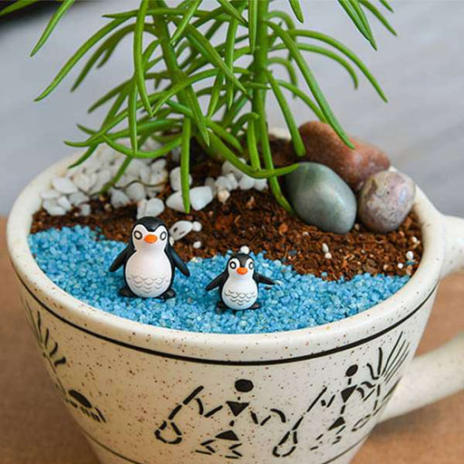 DIY Happy feet with Senecio - Miniature Garden - Nurserylive