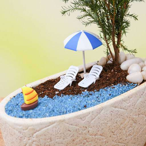 DIY Holiday on beach - Miniature Garden - Nurserylive