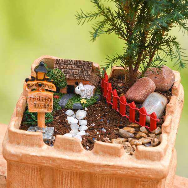 DIY House warming with farm house garden - Miniature Garden - Nurserylive