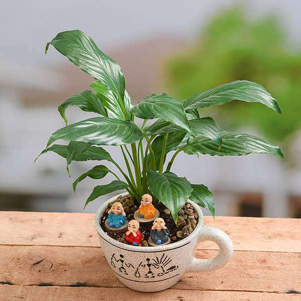 DIY Prosperity wishes from monks and plant - Miniature Garden - Nurserylive