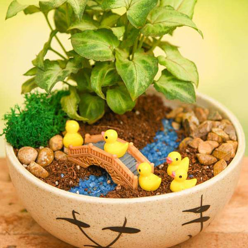 DIY River Crossing Ducklings - Miniature Garden - Nurserylive