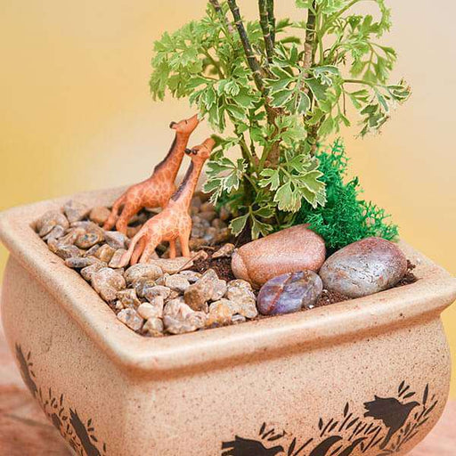DIY Wildlife - Miniature Garden - Nurserylive
