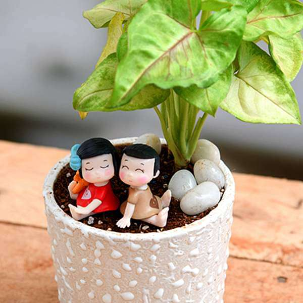 Share your love with Syngonium - Miniature Garden - Nurserylive