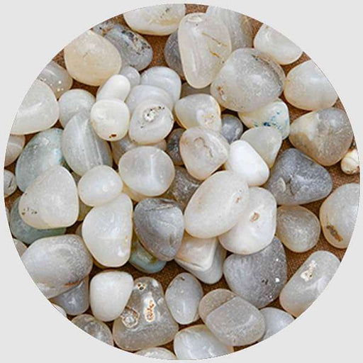 Onex Pebbles (White, Medium) - 1 kg - Nurserylive